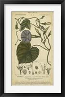 Framed Floral Botanica I