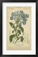 Framed Floral Botanica II