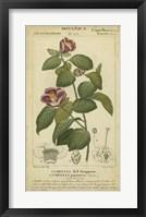 Framed Floral Botanica III