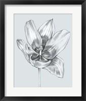 Framed Silvery Blue Tulips II
