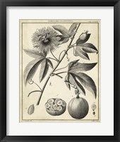 Framed Passiflora I