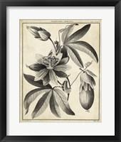 Framed Passiflora III