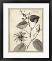 Framed Passiflora VI