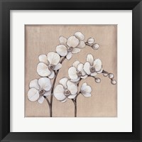 Framed White Orchid II