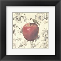 Framed Apple and Botanicals