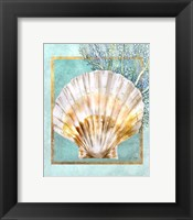 Framed Scallop Shell and Coral