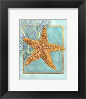 Framed Starfish and Coral