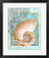 Framed Nautilus Shell and Coral