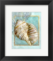 Framed Turban Shell and Coral