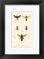 Framed Antique Bees I