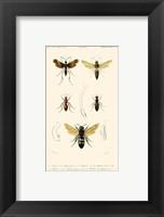 Framed Antique Bees I
