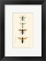 Framed Antique Bees II