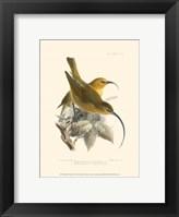 Framed Birds in Nature II