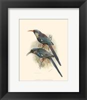Framed Birds in Nature III
