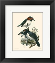 Framed Birds in Nature IV