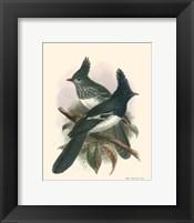 Framed Birds in Nature V