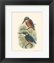 Framed Birds in Nature VI