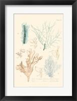 Framed Delicate Coral I