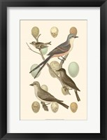 Framed British Birds and Eggs I