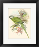 Framed Small Birds of Tropics II