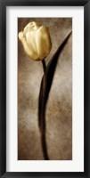 Framed Damask Tulip II