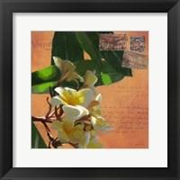Framed Plumeria & Postage II