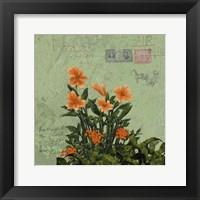 Framed Orange Blooms & Postage I