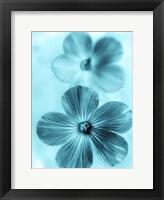 Framed Forget Me Not Blue I