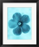 Framed Forget Me Not Blue II