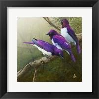 Framed African Starlings