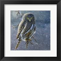 Framed Owl in Winter II