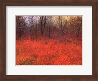 Framed Red Grass I