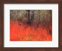 Framed Red Grass II