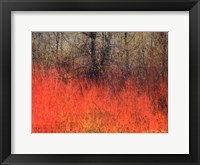 Red Grass II Framed Print