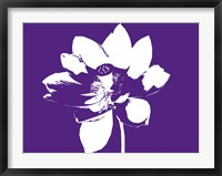 Framed Lilly on Purple