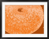 Framed Orange Abstract
