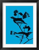 Framed Starlings