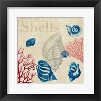 Framed Shell Study