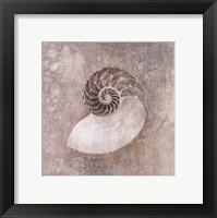 Framed Nautilus I