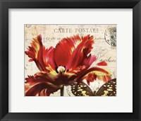 Framed Carte Postale Tulip I