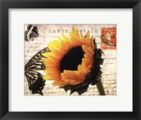 Framed Carte Postale Sunflower
