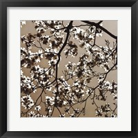 Framed Dogwood Square II