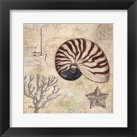 Discovery Shell I Framed Print