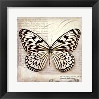 Framed Butterflies Script III - mini