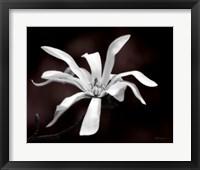 Framed Magnolia Dreams I
