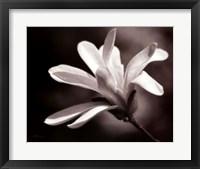 Framed Magnolia Dreams II