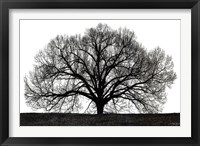 Framed Tree