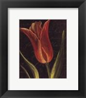 Framed Tulip