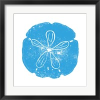 Framed Blue Sand Dollar