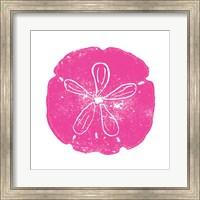 Framed Pink Sand Dollar